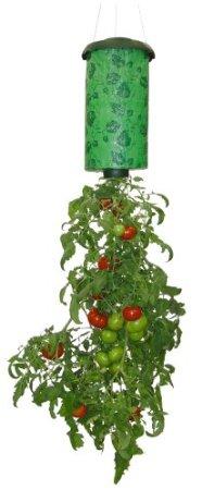 逆さトマト.jpg